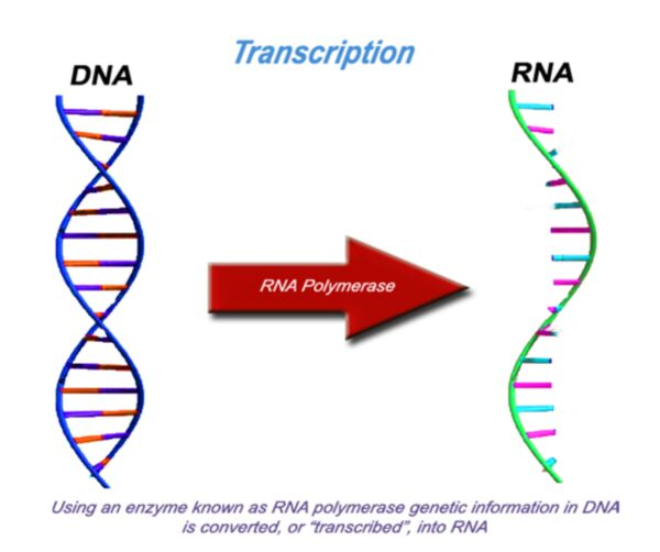 """The """"Central Dogma Of Biology"""""""